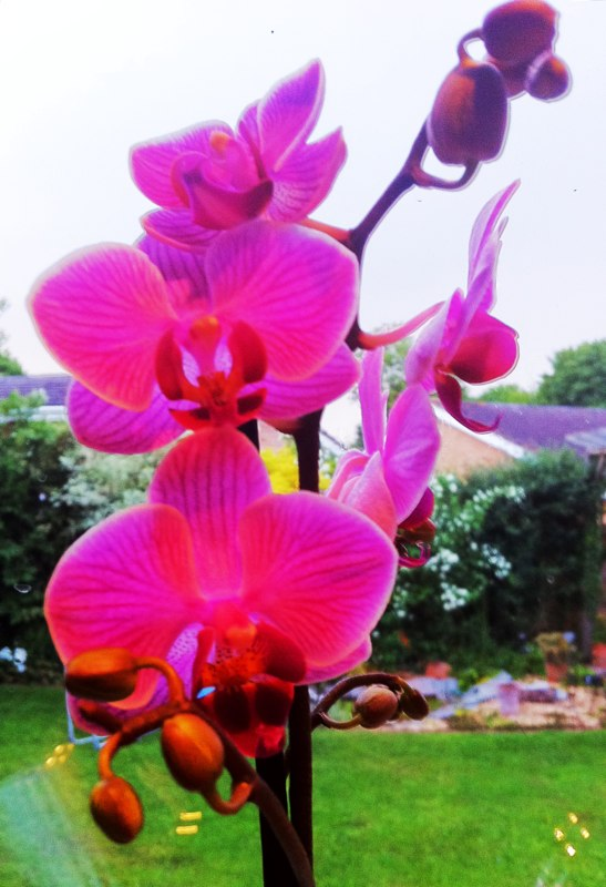 #flower #pink #orchid #anniversary #mum , Eventful